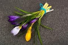 Flores do jardim da mola dos açafrões primeiras Fotografia de Stock