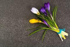 Flores do jardim da mola dos açafrões primeiras Imagens de Stock Royalty Free