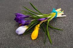 Flores do jardim da mola dos açafrões primeiras Fotografia de Stock Royalty Free