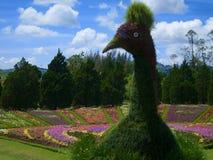 Flores do jardim do pavão do parque do sedan de Tiket Maduk fotografia de stock