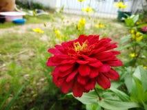 Flores do jardim na natureza Foto de Stock