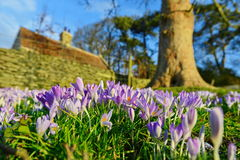 Flores do jardim que florescem na mola Foto de Stock Royalty Free