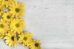 Flores do jardim sobre o fundo de madeira pintado da tabela contexto com espaço da cópia Flores bonitas no fundo de madeira Foto de Stock Royalty Free