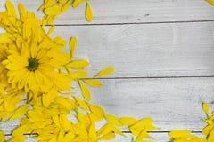 Flores do jardim sobre o fundo de madeira pintado da tabela contexto com espaço da cópia Flores bonitas no fundo de madeira Imagens de Stock