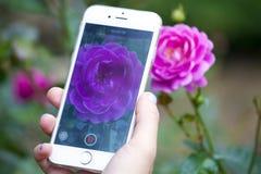 Flores do jardim do tiro do smartphone da mão foto de stock