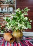 Flores do jasmim em um jarro interior ereto imagem de stock