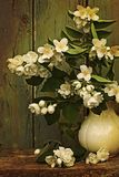 Flores do jasmim em um vaso Imagens de Stock Royalty Free