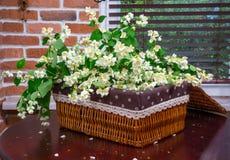 Flores do jasmim no interior fotos de stock royalty free