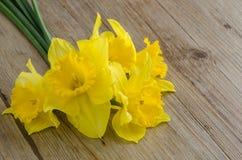 Flores do junquilho Imagens de Stock