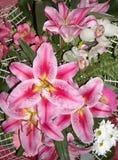 Flores do lírio foto de stock royalty free