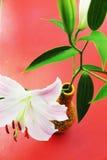 Flores do lírio, fundo do outono Fotografia de Stock Royalty Free