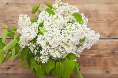 Flores do Lilac Foto de Stock