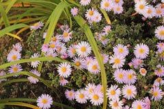 Flores do Lilac Imagens de Stock Royalty Free