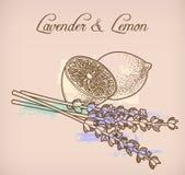 Flores do limão e da alfazema Imagens de Stock