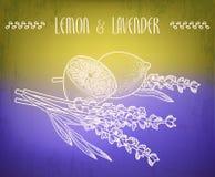 Flores do limão e da alfazema Fotos de Stock Royalty Free