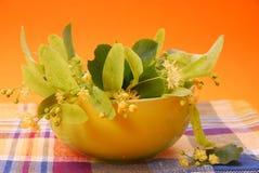 Flores do Linden Fotografia de Stock Royalty Free