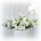 Flores do lírio Fotos de Stock Royalty Free