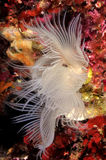 Flores do mar fotografia de stock