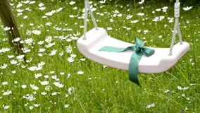 Flores do Marguerite em um prado e em um balanço video estoque