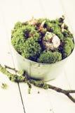 Flores do musgo e do bulbo Foto de Stock