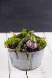 Flores do musgo e do bulbo Imagem de Stock Royalty Free