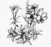 Flores do narciso e dos lírios ilustração do vetor
