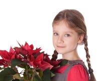 Flores do Natal Foto de Stock