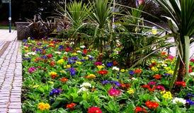 Flores do Natal Imagem de Stock Royalty Free