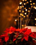 Flores do Natal com luzes douradas Imagem de Stock
