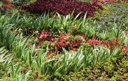 Flores do ornamental do jardim Fotos de Stock Royalty Free