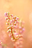 Flores do outono Imagem de Stock