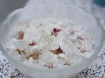 Flores do pêssego Imagem de Stock