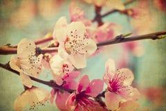 Flores do pêssego de Grunge fotografia de stock