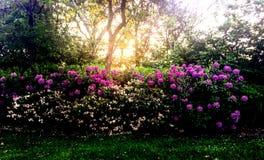 Flores do parque foto de stock