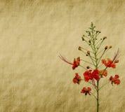 Flores do pavão na árvore Foto de Stock Royalty Free