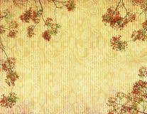 Flores do pavão na árvore Imagens de Stock Royalty Free