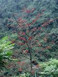 Flores do perfume Imagem de Stock
