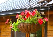 Flores do petúnia na cesta de suspensão do potenciômetro de flor Imagem de Stock
