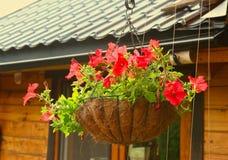 Flores do petúnia na cesta de suspensão do potenciômetro de flor Foto de Stock Royalty Free