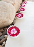 Flores do Plumeria em uma bacia Imagem de Stock