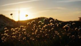 Flores do por do sol Fotos de Stock Royalty Free