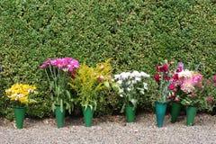 Flores do potenciômetro fotos de stock royalty free
