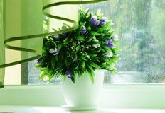 flores do potenciômetro Fotografia de Stock Royalty Free