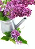 Flores do potenciômetro do lilás e do metal Imagem de Stock