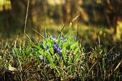Flores do prado Fotos de Stock Royalty Free