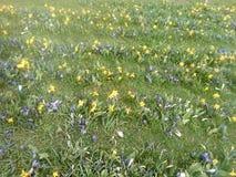 Flores do prado Imagens de Stock