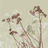 Flores do prado Fotos de Stock