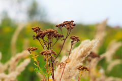 Flores do prado Fotografia de Stock Royalty Free