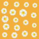 Flores do prado do verão Ilustração com camomila Fundo alaranjado floral do verão com flores brancas ilustração stock