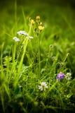 Flores do prado na grama foto de stock royalty free